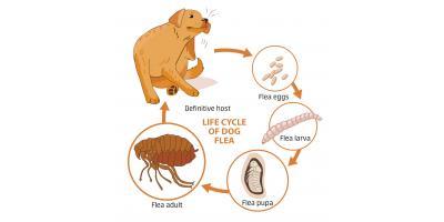 Why Winter Flea Control Is Necessary, Garden City, Georgia