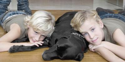 Which Types of Flooring Are Best When You Have Kids & Pets?, Onalaska, Wisconsin