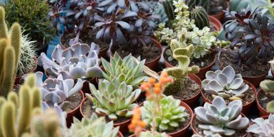 Everything You Need to Know About Succulents, Springfield, Massachusetts
