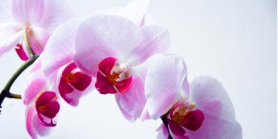 Need a Unique Gift? Discover 3 Artistic Orchid Flower Arrangements, New York, New York