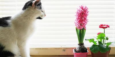 How to Keep Pets Away From Your House Plants, Port Jervis, New York