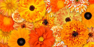 Limited-Time Discount on Flower Arrangements!, Branford Center, Connecticut
