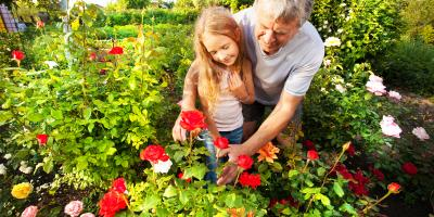 What Makes Rose Bushes Stop Blooming?, Anchorage, Alaska