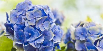 3 Flowers That Are Perfect for Spring, Lewisburg, Pennsylvania