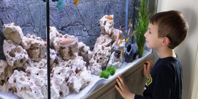 How to Move an Aquarium, Orange Beach, Alabama