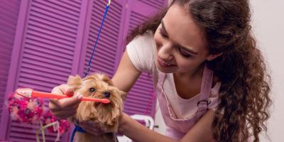3 Helpful Dog Grooming Tips, Foley, Alabama