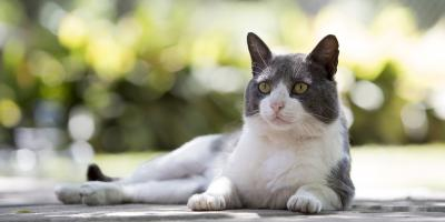 What to Do If Your Cat Wants to Go Outside, Foley, Alabama