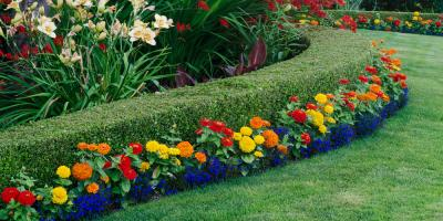 Foster Your New Garden With These 5 Starter Flowers, Anchorage, Alaska