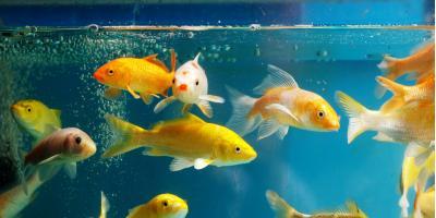 3 Algae-Eating Freshwater Fish, Moraine, Ohio
