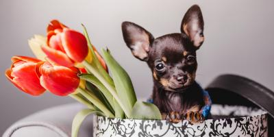 5 Common Household Items That Are Poisonous to Pets, Covington, Kentucky