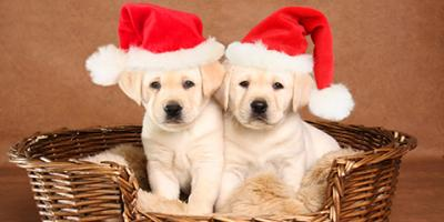 Pet Supply Store Lists the Pros & Cons of Puppies for Christmas, Conyers, Georgia