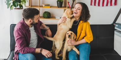 5 Tips for Maintaining a Clean House With Pets, Gaithersburg, Maryland