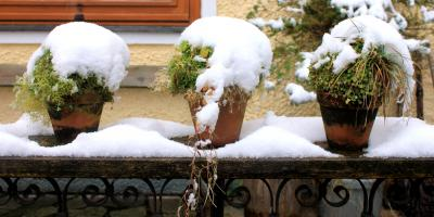 4 Surprising Ways Winter Weather Affects Your Plants, Anchorage, Alaska