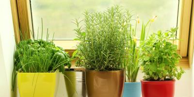 3 Steps to Building a Windowsill Garden, Colerain, Ohio