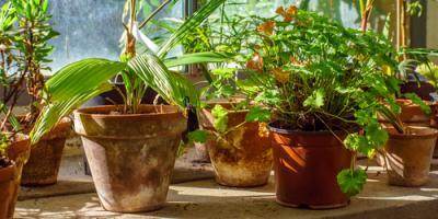 5 Steps to Designing an Indoor Gardening Space  , Denver, Colorado