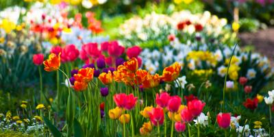 Gardening Experts Explain How to Extend the Life of Your Plants During Summer, Fairfield, Ohio