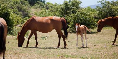 How to Control Weeds in a Pasture, Whiteville, Arkansas