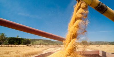 5 Ways to Get Your Grain From the Field to the Grain Bin—Fast, Cairo, Georgia
