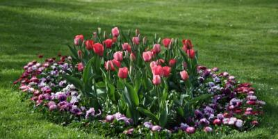 3 Tips on How to Restore Your Grass After a Connecticut Winter, Wolcott, Connecticut