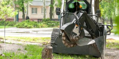 3 Ways Tree Stumps Can Create Pest Problems In Your Yard, Macedon, New York
