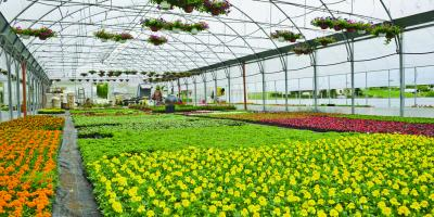 5 Ohio Flowers to Plant in Early Spring, Colerain, Ohio
