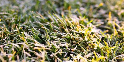 Sunnyside Greenhouse Shares Tips for Planting a Cover Crop, Quaker City, Ohio