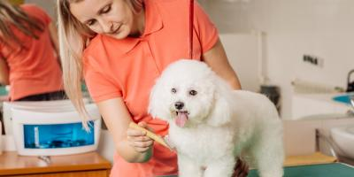 What You Need to Know About Pets Shedding Their Winter Coats, Miami, Ohio
