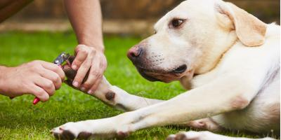 Why It's Important to Trim Dog Nails , Lincoln, Nebraska