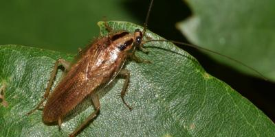 Pest Control needed for roach infestation, Mobile, Alabama