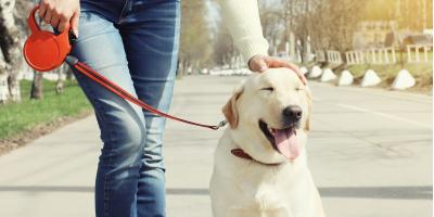 What You Need to Tell Your Pet Sitter, Hilo, Hawaii