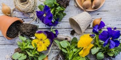 Hamilton Garden Center Shares Advice for Annual Flowers, Hamilton, Ohio