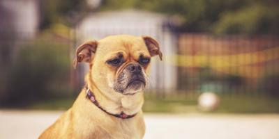 3 Signs Your Pet Needs an Emergency Vet, Bainbridge Island, Washington
