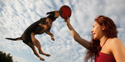 5 Dog Trainer-Approved Tips for Controlling Your Dog's Jumping, Addison, Illinois