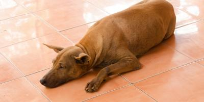What Are the Best Flooring Options for Homes With Pets?, Green, Ohio