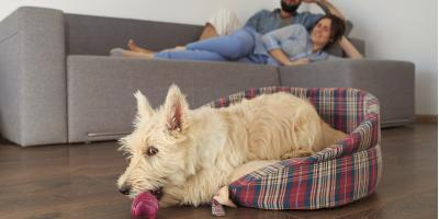 3 Ways to Protect Hardwood Floors From Pets, Egg Harbor, Wisconsin