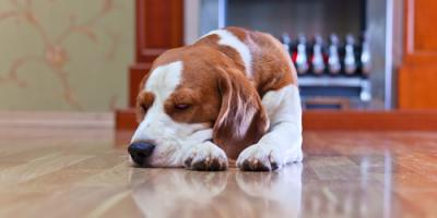 3 Pet-Friendly Hardwood Flooring Choices, Chesterfield, Missouri