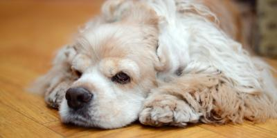 5 Easy Ways to Protect Your Hardwood Flooring From Pets, Pittsford, New York