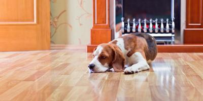 How to Get Rid of Dents in Hardwood Flooring, Chesterfield, Missouri