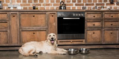 3 Ways to Make a Custom Kitchen Pet Friendly, Greenburgh, New York