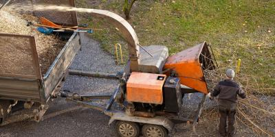 4 Reasons to Use Tree Removal Services, Marshan, Minnesota