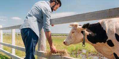 The History of Livestock Feed, 4, Tennessee