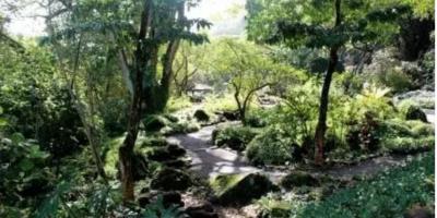 3 Native Hawaiian Plants to Keep an Eye Out For, Koolauloa, Hawaii
