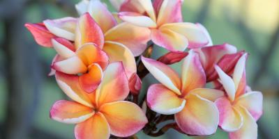 5 Hawaiian Plants to Instantly Beautify Your Garden, Kihei, Hawaii