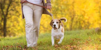 5 Benefits of Walking Your Dog, Round Lake, Wisconsin