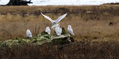 A Guide to Photographing Birds in Denali, Healy, Alaska