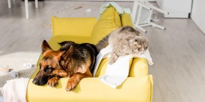 How Do Pets Affect Your HVAC System?, Foley, Alabama