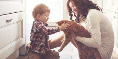 3 HVAC Maintenance Tips for Pet Owners , Frewsburg, New York