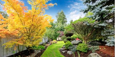 5 Ways to Evaluate Tree Health, Hempstead, New York