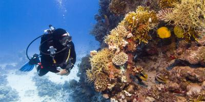 5 Fascinating Facts About Scuba Classes, Henrietta, New York