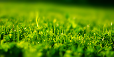 3 Maintenance Tips That Will Keep Your Artificial Grass Pristine, Fremont, California